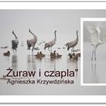 """Wystawa Fotografii """"Żuraw i czapla"""" Agnieszka Krzywdzińska"""